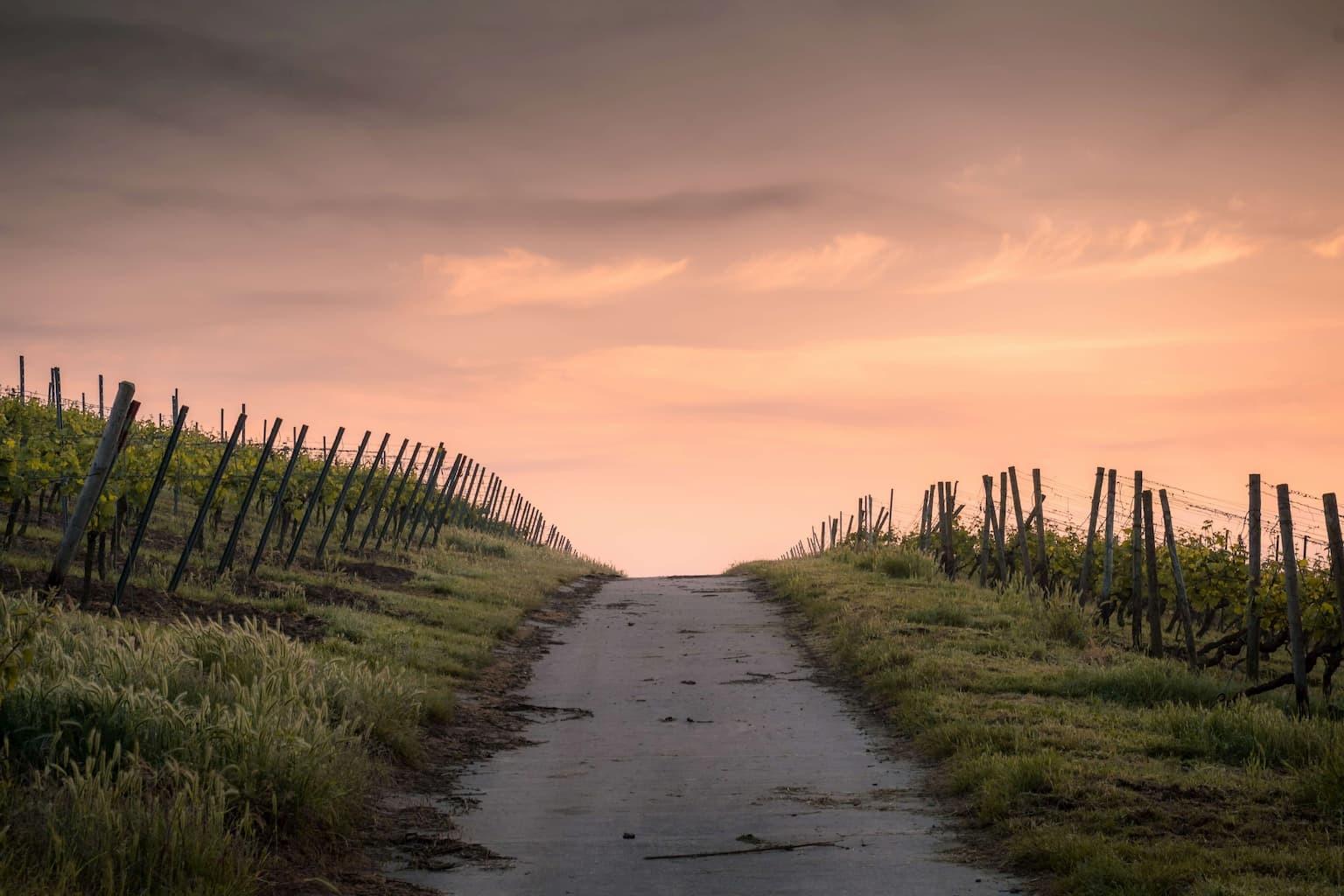 Pathway photo by Karsten Würth on Unsplash